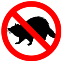 Removal of Nuisance raccoons in kitchener and waterloo